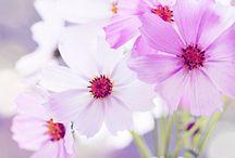 Flowers / by Gayle Waldo