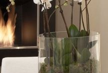 Plants and flowers / by Nordic Home