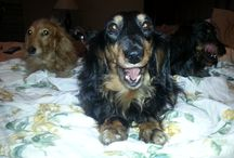 Oh! Those Weiners! / Anything Dachusand / by Rick Bateman