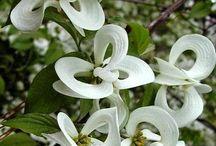 lindas plantas / flores, arboles, etc / by LUCIAGHS