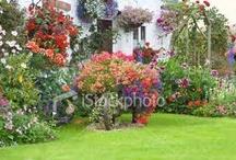 garden wishes / by LeAnn Price