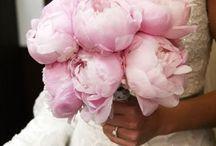 My Favorite Flower / by Lisa Francina