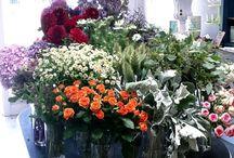 Flower Shops / by Sheila Alvarez