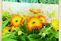 Flowers, Plants & Gardening Ideas / by Staci Inskeep