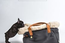 Dream home: pets / by Solveig Tinlund