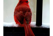 Birds / by Joan Mclain