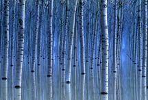 Art ED:  Trees and flowers / by Rachel Bingham