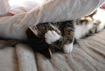 Here Kitty, Kitty / by Lori Smith