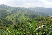 Costa Rica / by Karyn Manor