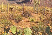 dear desert,  / by tamara del valle