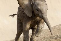 I love elephants ♡♥♡♥ / by Jane Bedford-Crooks-Paredes