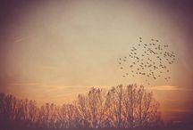 Autumn / by Cassie
