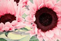 Flowers / by Amanda Finkenbine