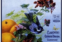 Fruit Crate Art & Seed pkg art / by Kathleen Smith