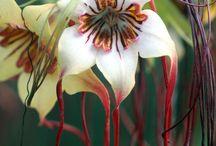 Strange Plants / by Alyce Carrillo