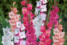 Dahlia's, tulips, iris's. daffodils and gladeeaddeeolllias / by Gina Latner