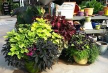Container Gardening / by White Oak Gardens
