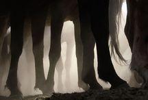 Equus / by Alex Carpentier