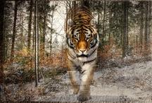 Animal  kingdom / by Lola Elvz