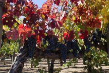 Wine, Napa CA / by Serrano