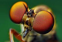 biomimetic / by Herman Zonis