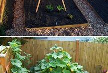 Garden  / by ME! ME!