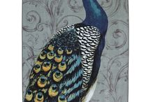 Peacock / by Twylen Hadley