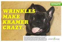 Summer Prevention Models / Be kind to your skin...and to these cute pups. / by Prevent Cancer Foundation