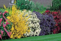 Lanscaping ideas / by Leslie Nardi