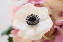 flowers / by Cin MX