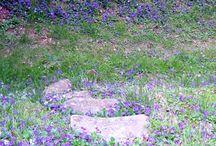 Spring flowers / Wildflowers and Springtime beauties / by Barbara Lee