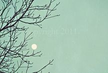 To the Moon & Back / by Eileen Smith Farleigh