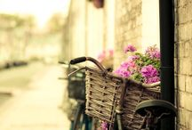 Bicycles / by Avril Dudley