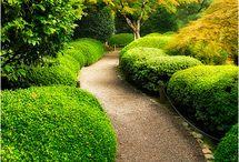 Oregon / by Susan McBurnett