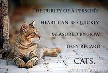 CAT  QUOTES / by Linda and Bill