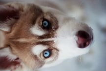 Furry Friends / by Lindsay Sykes