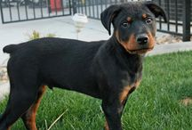 Pets I want! / by Caity Delgado