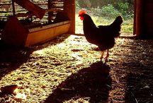 Down on the farm / by Wanda Keehler
