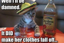 Funny stuff :) / by Jennifer Platt