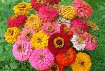 Flowers / by Nancy McNeal