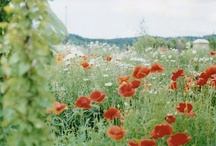 Field of Flowers / by Erica