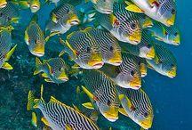 Aquatic Beauty / by Jay Alders