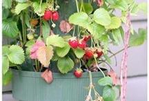 Gardening / by Donna Flake