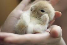 Cute animals / by Natasja Elisabeth