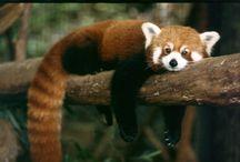 Sleepy! / by Binghamton Zoo