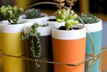 indoor gardening / by Jill Peña