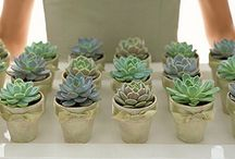 succulents  / by Lucy (Craftberry Bush)
