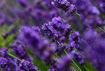 Flowers / by Veronique Gosselin