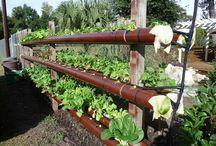 Gardening / by Yevon Salfer