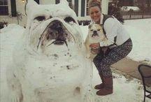 I love English Bulldogs / by Pauline Fallon